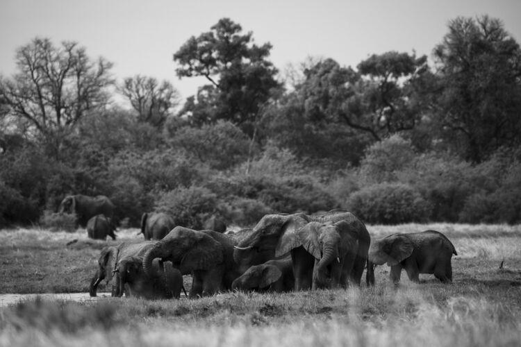 Elephants at Waterhole - Fine Art Photography Print