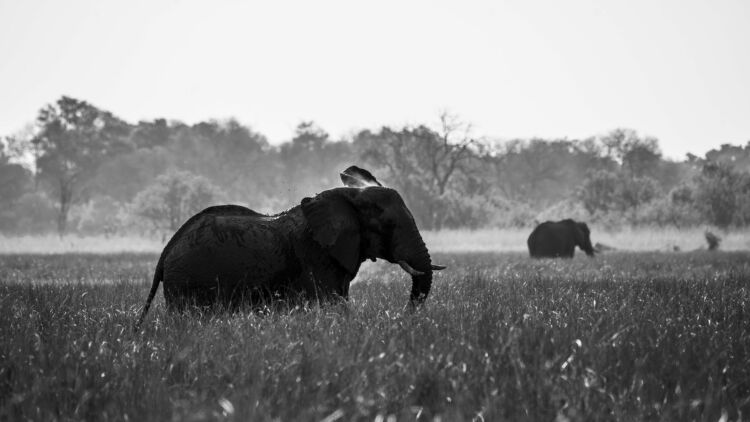 Elephant in the Grass - Fine Art Photography Print