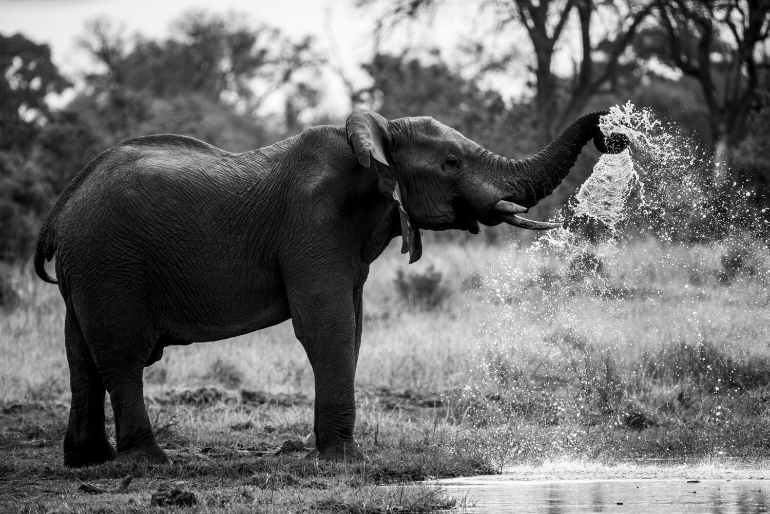 Elephant at Waters Edge - Fine Art Photography Print