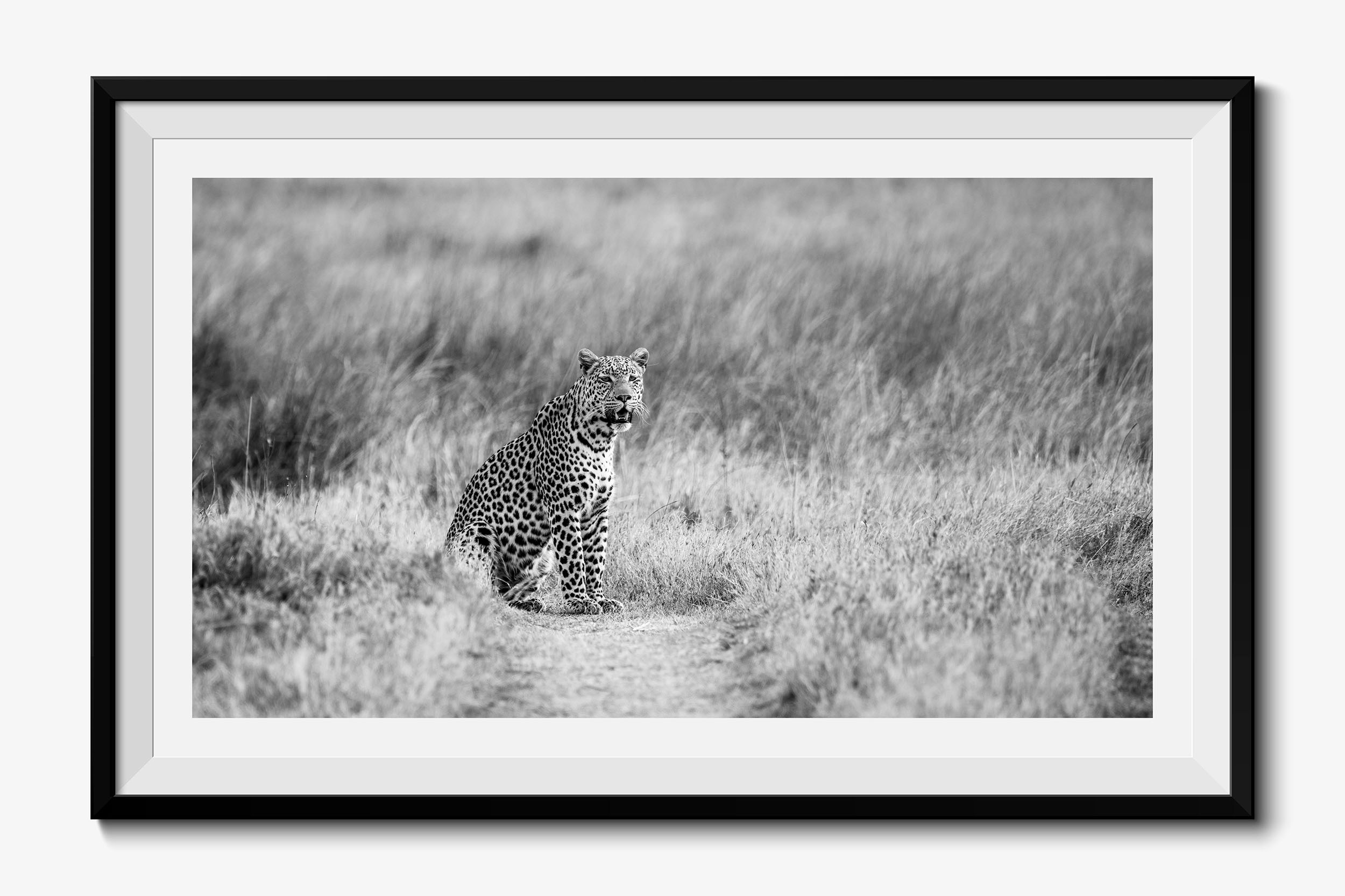 Fine Art African Wildlife Photography Prints