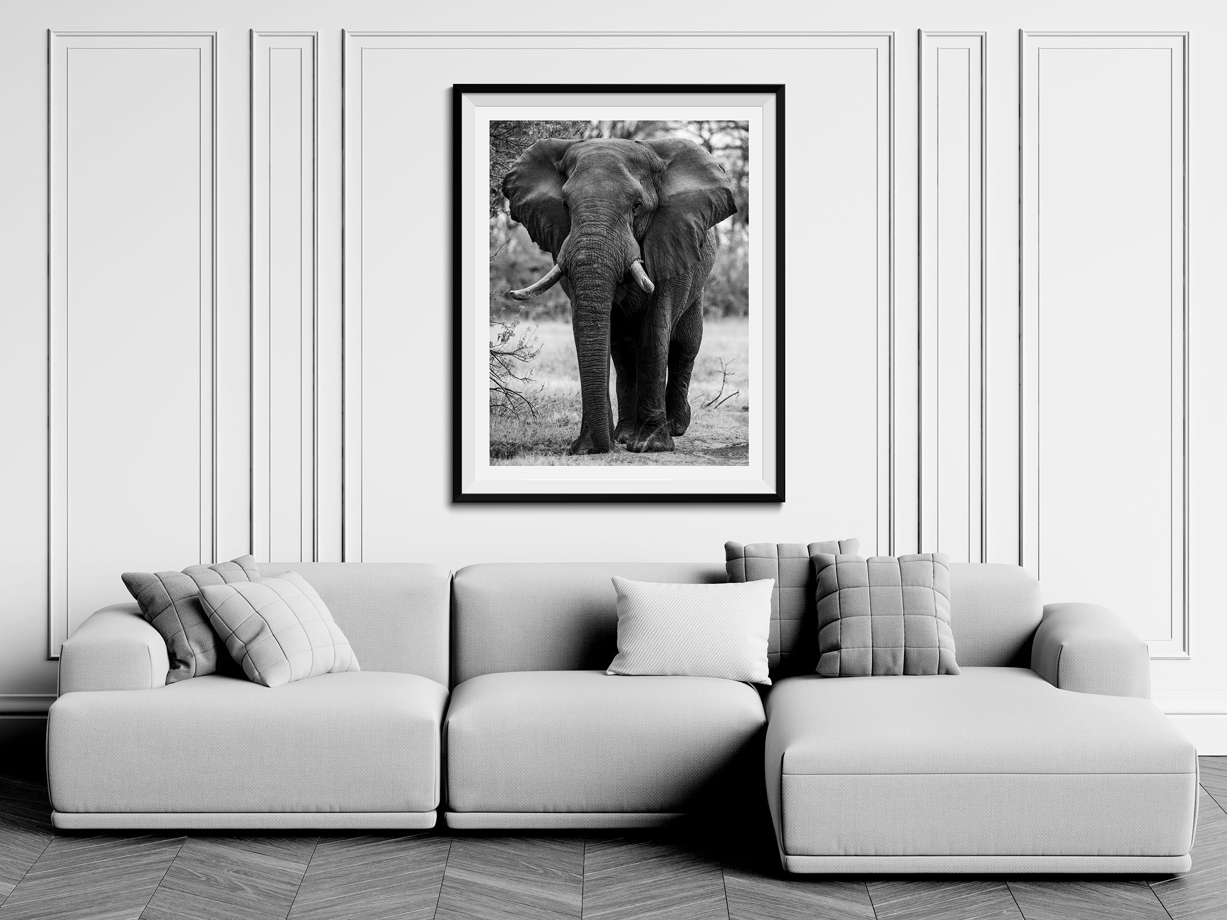 The Bull - Fine Art Photography Print