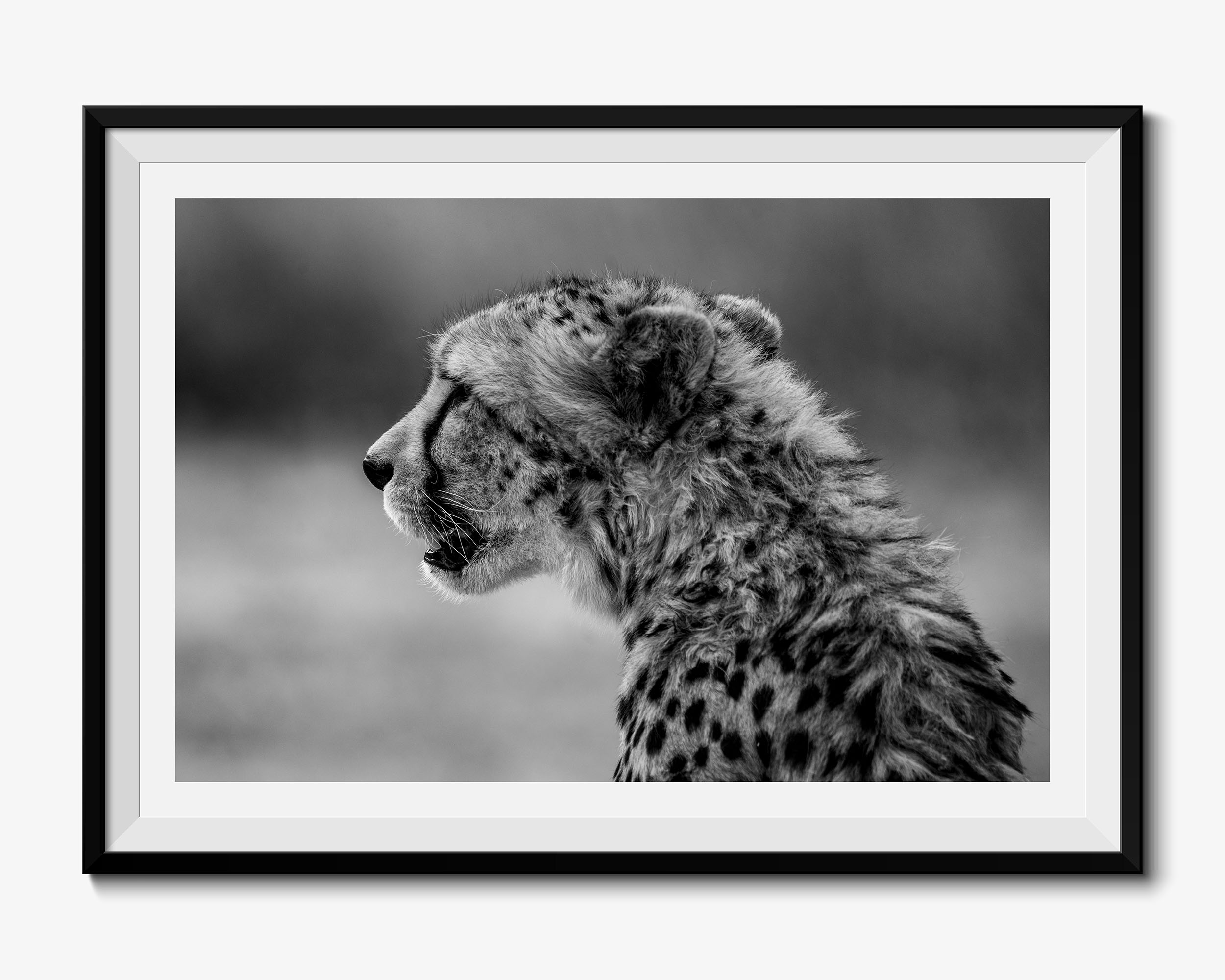 Cheetah - Fine Art Photography Print