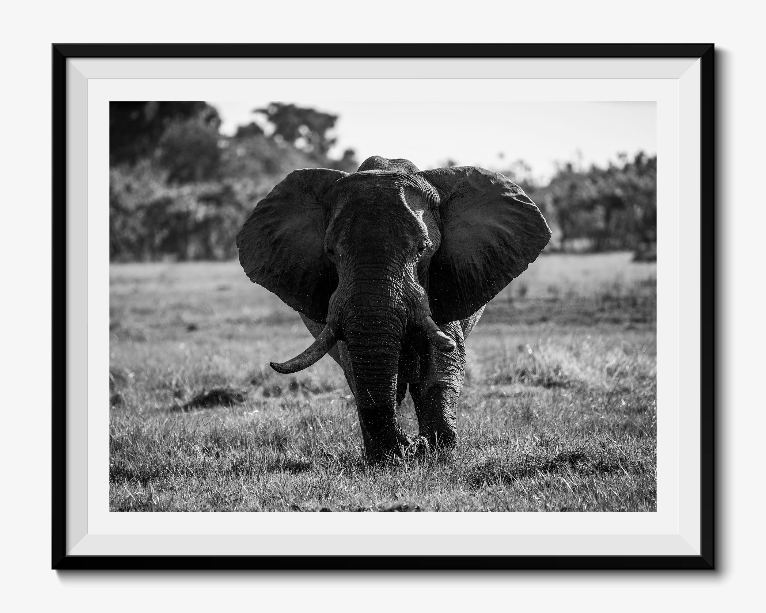 Big Daddy - Fine Art Photography Print