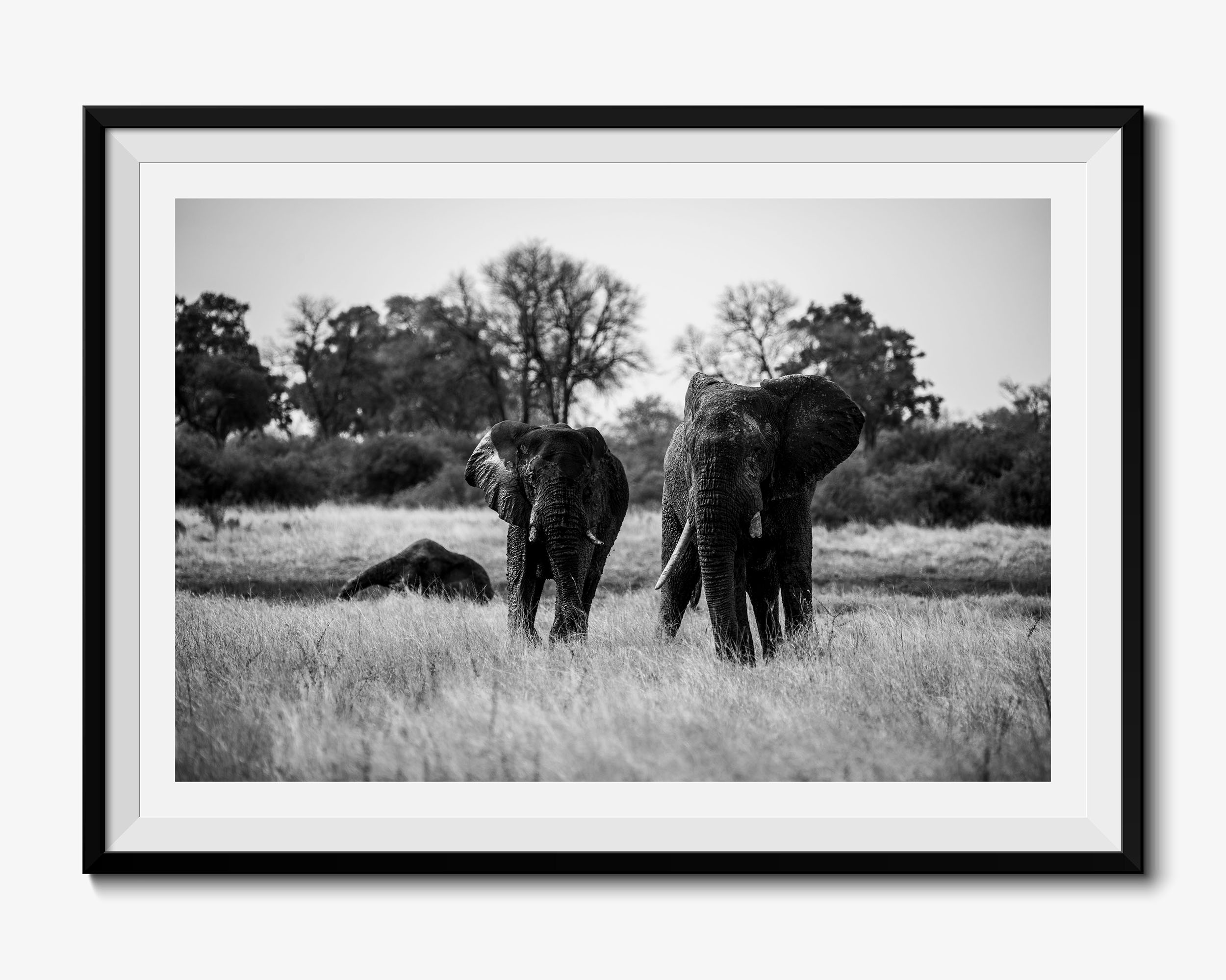 Venerable - Fine Art Photography Print
