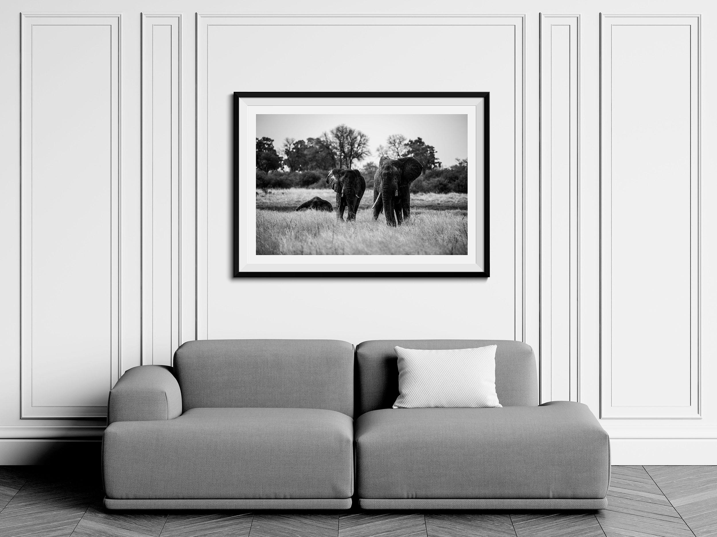 Venerable - Fine Art Photography Print