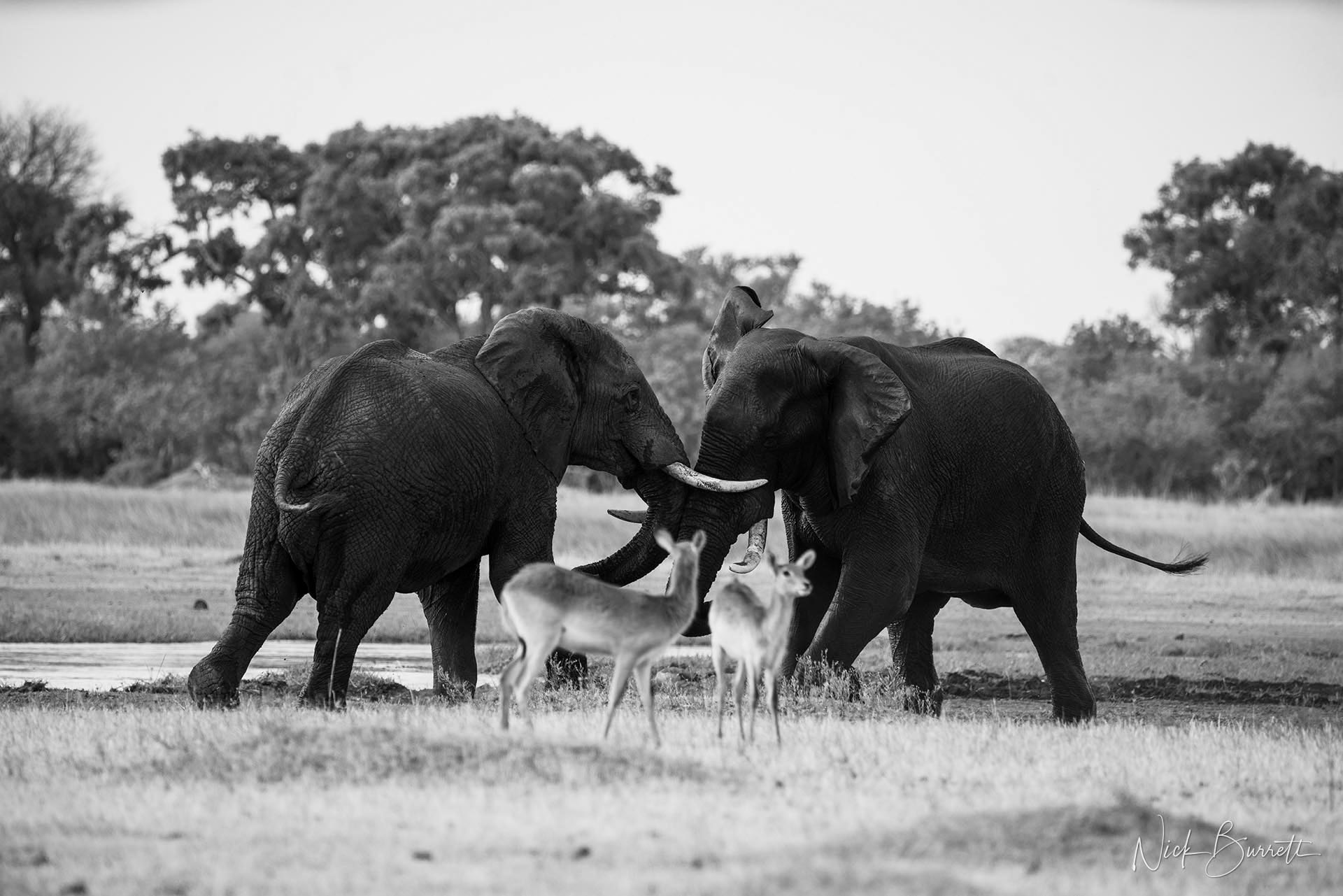 Africa Botswana Okavango Photography Safari Workshop by Nick Burrett