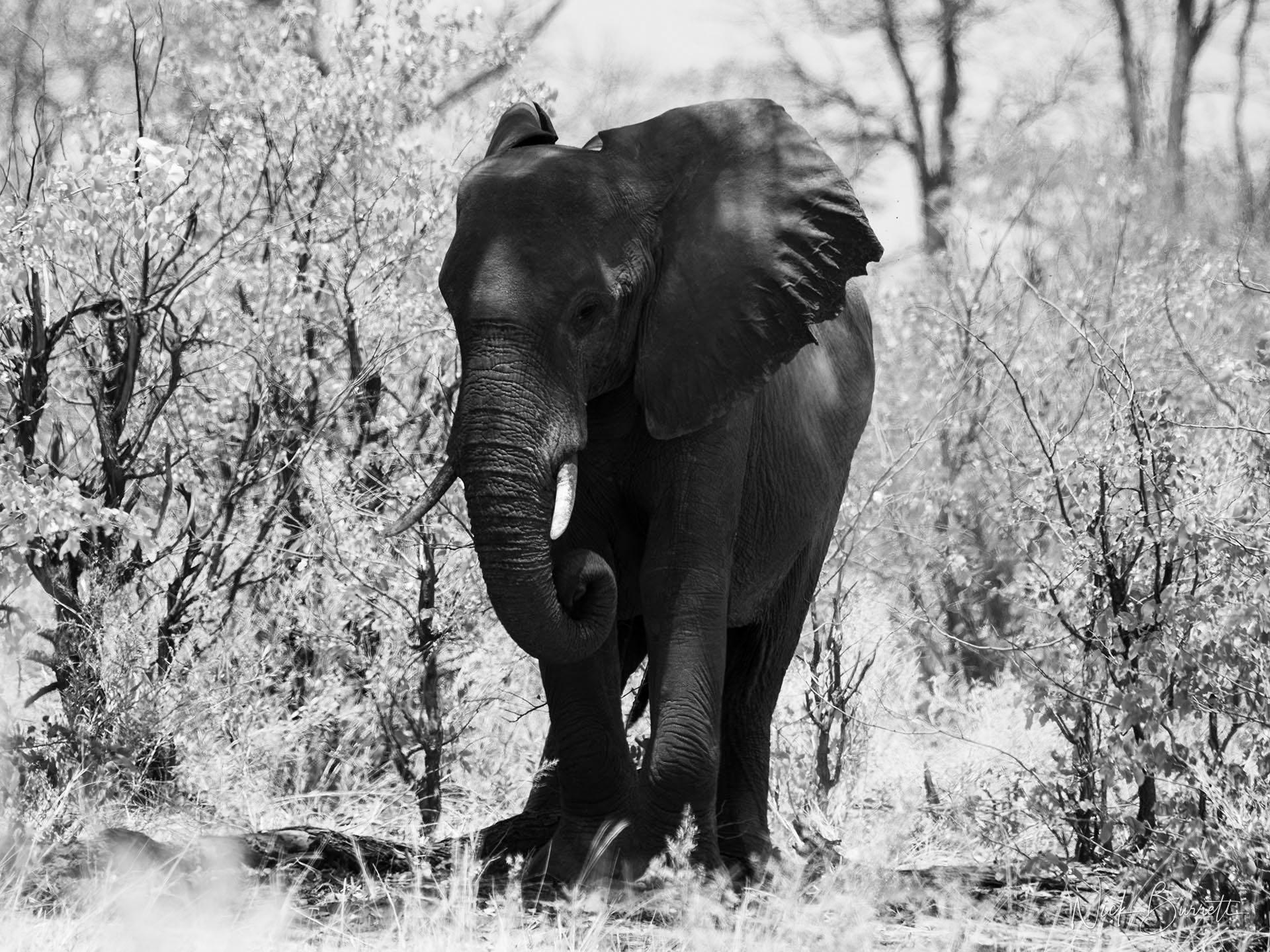 Africa Botswana Okavango Photography Safari Workshop by Nick Burrett
